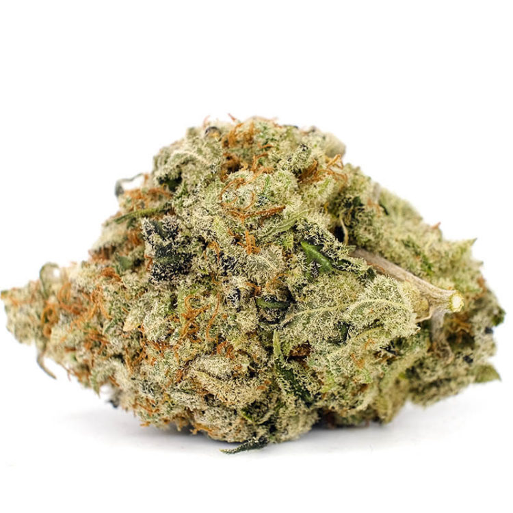 Buy Sunset Sherbet Online - Canamela Weed Store